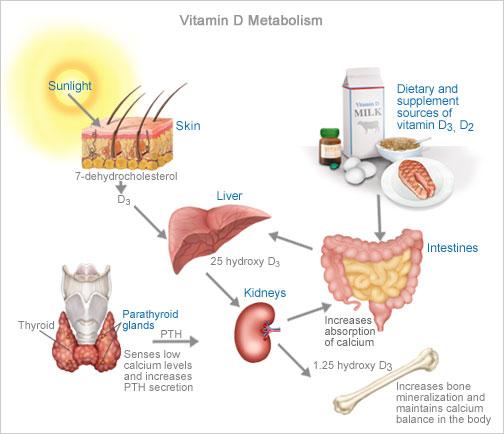 Healthy wealth: Vitamin D : The Sunshine Vitamin