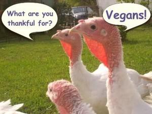 Turkeys thankful for vegans