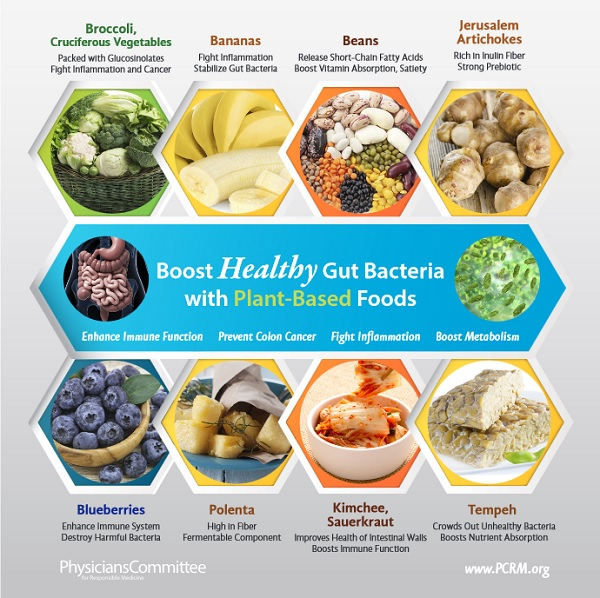 PCRM infographic-gut-bacteria