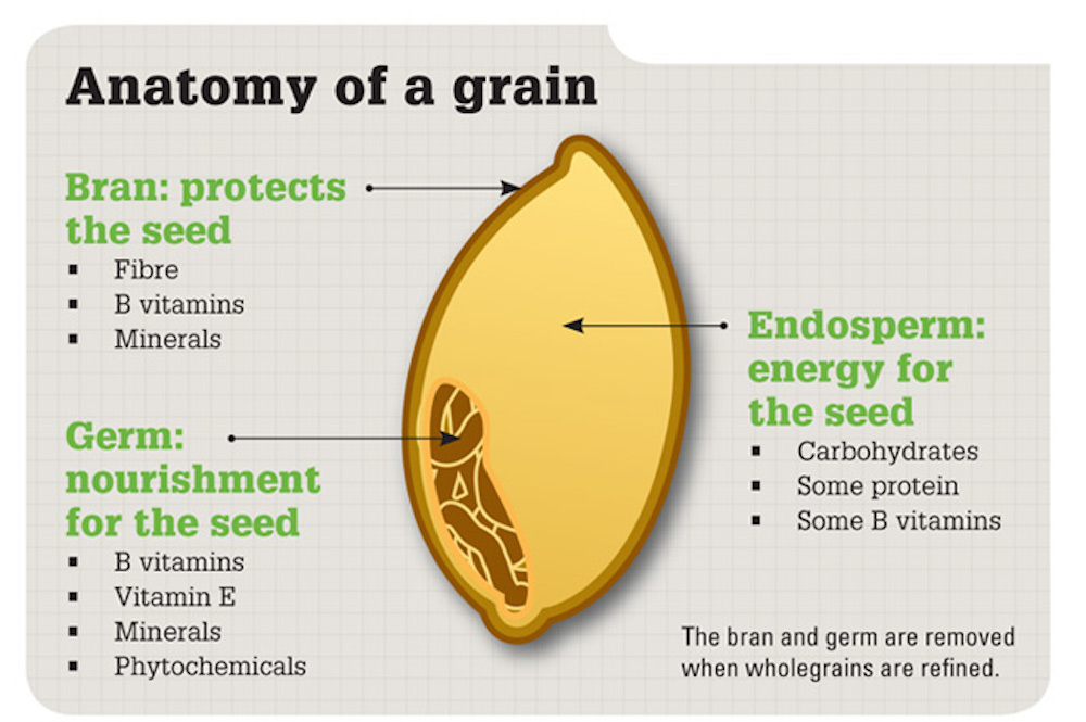Anatomy Of A Grain Plant Based Dietitian